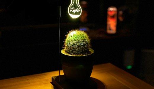 【LUCHE レビュー】おしゃれなインテリアのひとつとして室内で園芸が楽しめるバリエーション豊富な栽培ライト